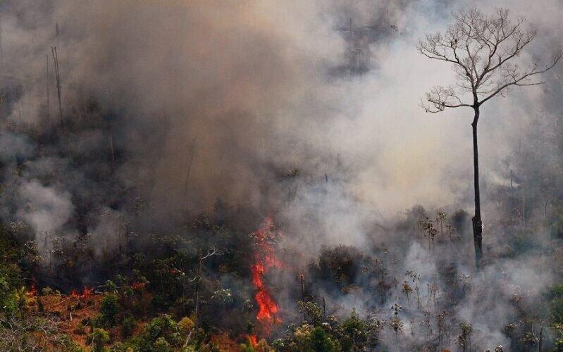 پاپ خواهان اقدام جهانی برای مهار آتش سوزی آمازون شد