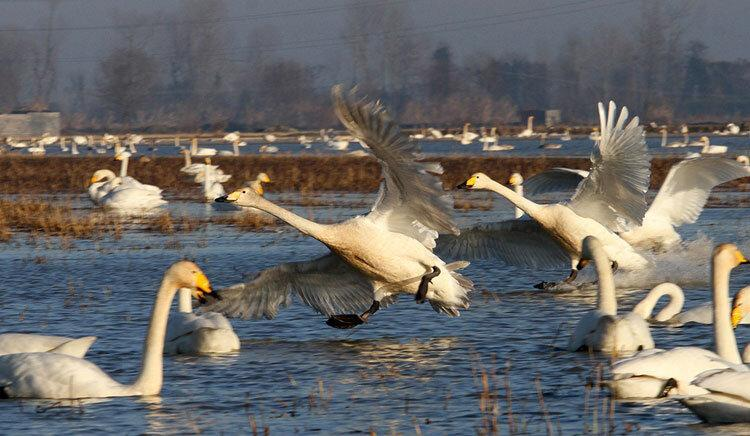 پایش صیدگاه های فریدونکنار برای حفاظت از پرندگان